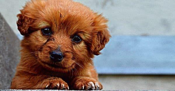 tips bij de aanschaf pup