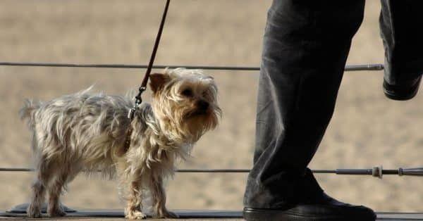 waarom hond niet mee wandelen