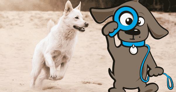 honden-wandelroutes