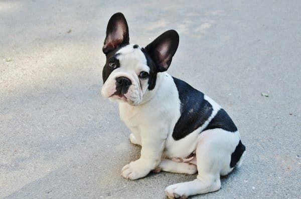 Top 10 honden - nummer 7