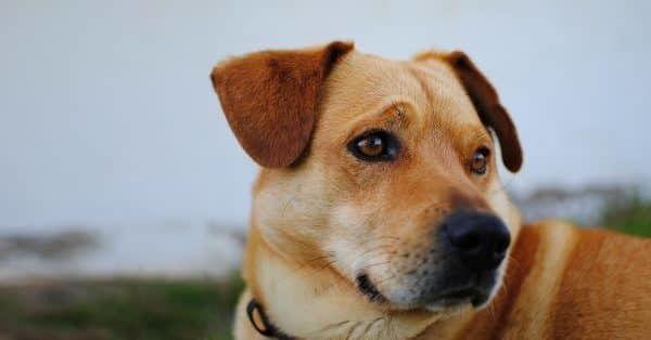 angstige hond over bang en onzekere honden