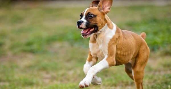 buitenland met je hond inenting