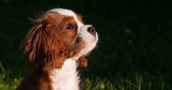 hoe herken je blaasonsteking bij hond