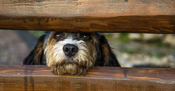 twijfels over gezondheid hond