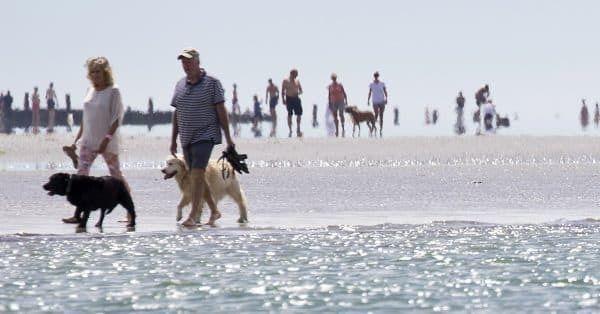 wandelen met je hond alle mogelijkheden