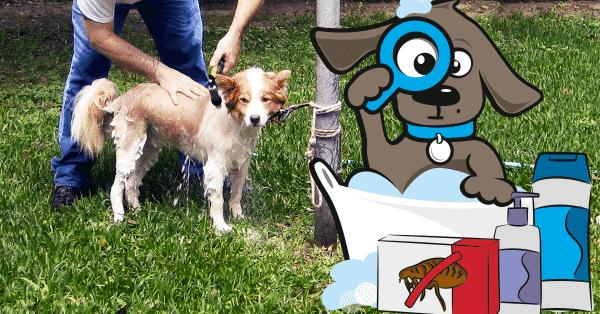 hond-wassen-tegen-vlooien