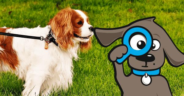 keizersnede-hond