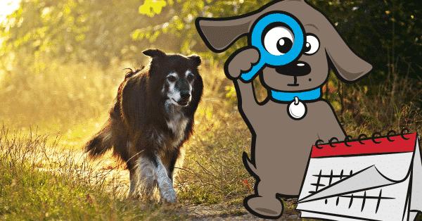 drachtkalender-voor-honden
