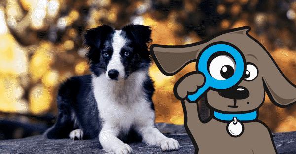 vaccinatie-rabies-hond