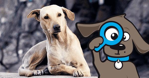 inentingen-hond-schema