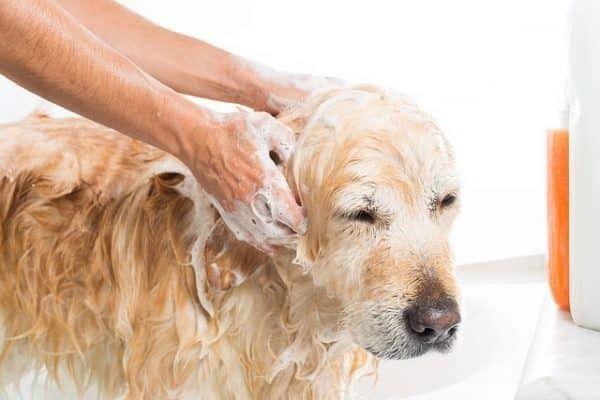 hond-wassen
