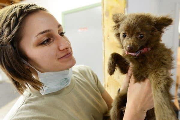 inentingen pup