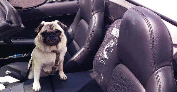 pug in auto