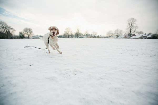 hond-eet-sneeuw
