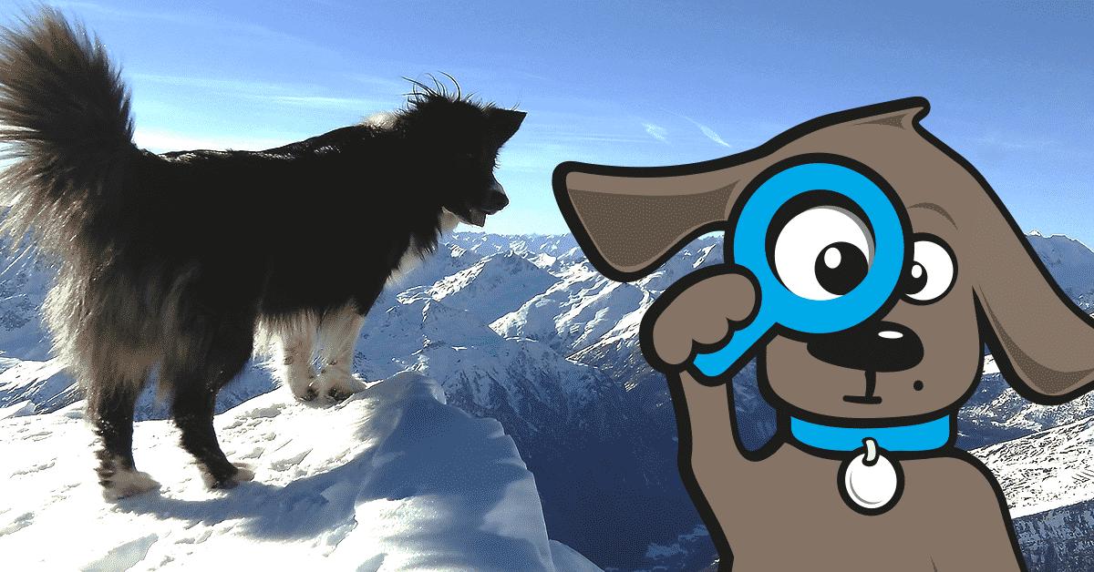 honden-en-wintersport