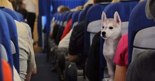 hond in vliegtuig