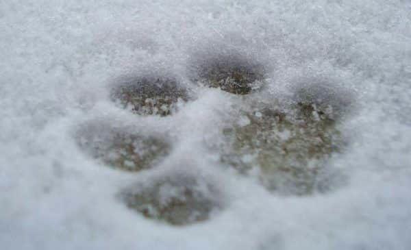 hondenschoenen sneeuw