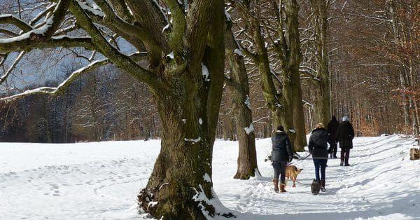 wandelen hond winter