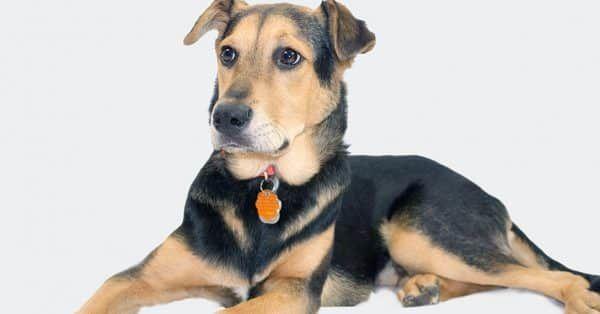 angst hondenbaasjes