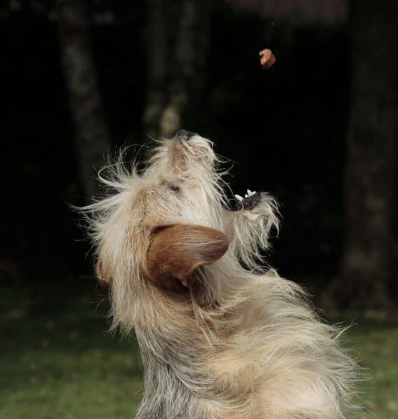 voeding hond epilepsie