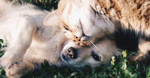 hond en kat in huis