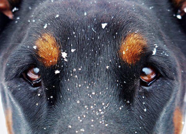 hoog risico honden maatregelen