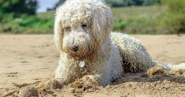 met hond naar strand