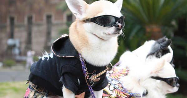 top 5 honden carnaval kostuum