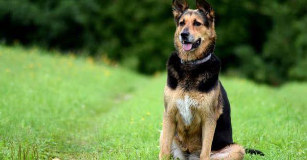 veilig reizen met je hond