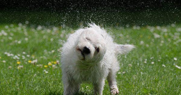 verzorging voor je hond