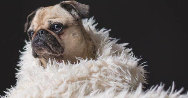 waar slaapt jouw hond