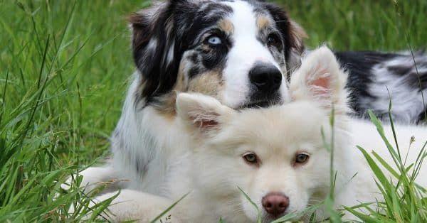 hond adopteren of kopen