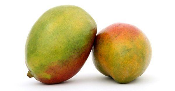 mango mag een hond