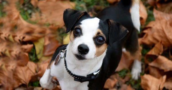 medisch honden t shirt