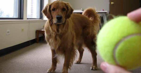 top 10 slimste hond