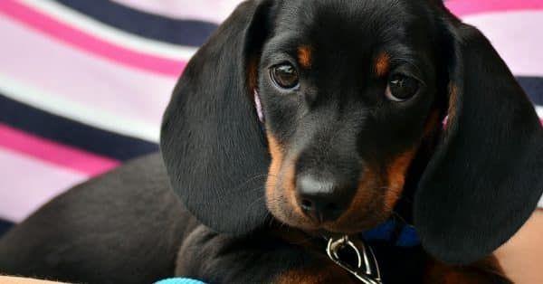 10 hondenweetjes feit of fabel