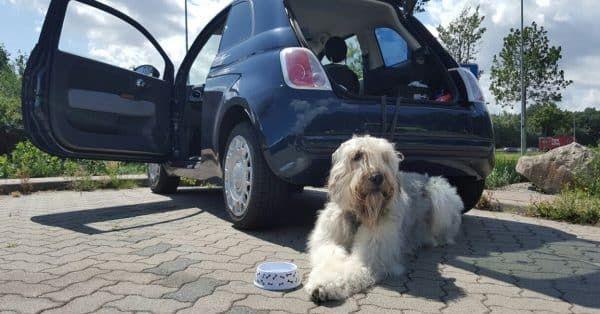 21 tips autovakantie met je hond