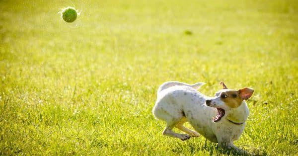 5 favoriete spelletjes om samen met je hond te doen