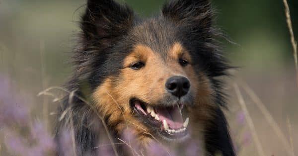 5 tips om tandplak bij je hond te herkennen