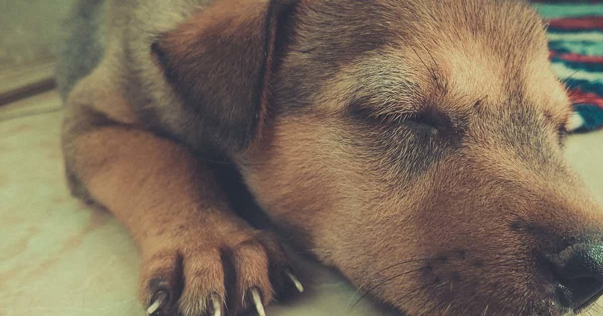 Hondenbench Kopen 21 Tips Om De Juiste Bench Te Kiezen