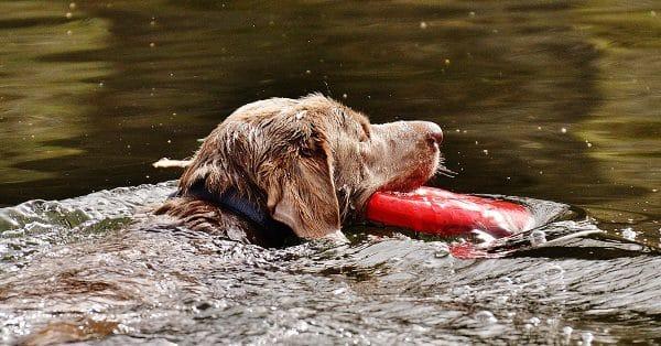 Aquatrainer voor honden • Tinki.nl