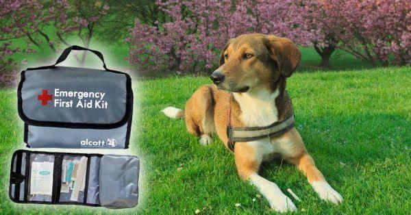 EHBO koffertje voor je hond