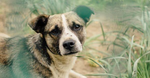Hoe en wat zien honden nou eigenlijk?