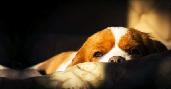 Huiduitslag bij je hond