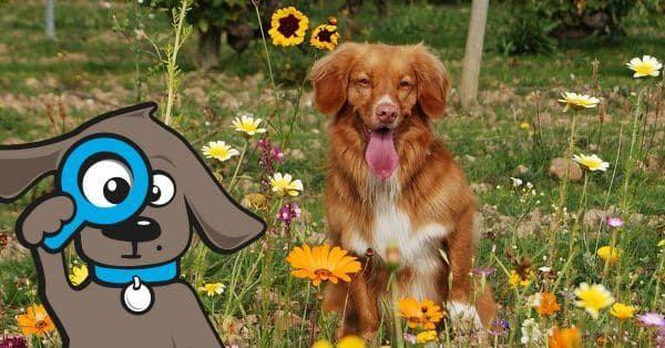 teken ontdekken hond