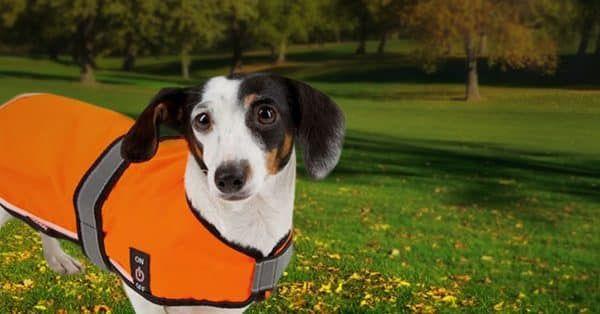 Je hond is beter zichtbaar met een veiligheidsvest