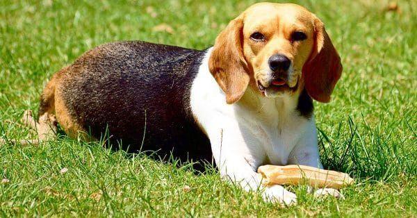 Welke beloningssnacks zijn geschikt voor jouw hond?