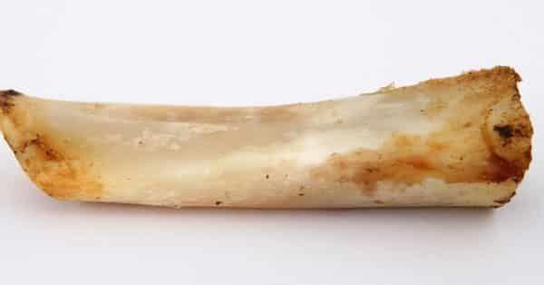 botten mag een hond