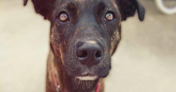 honden asiel in spanje