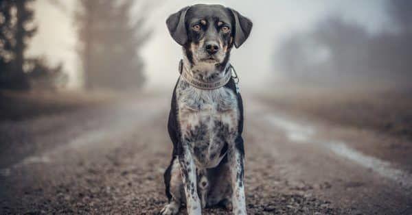 ik wil een hond wat nu